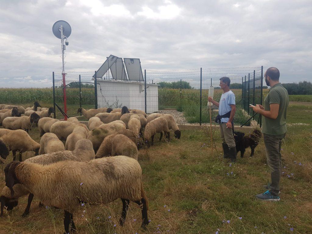 animal poisoning in serbia awareness
